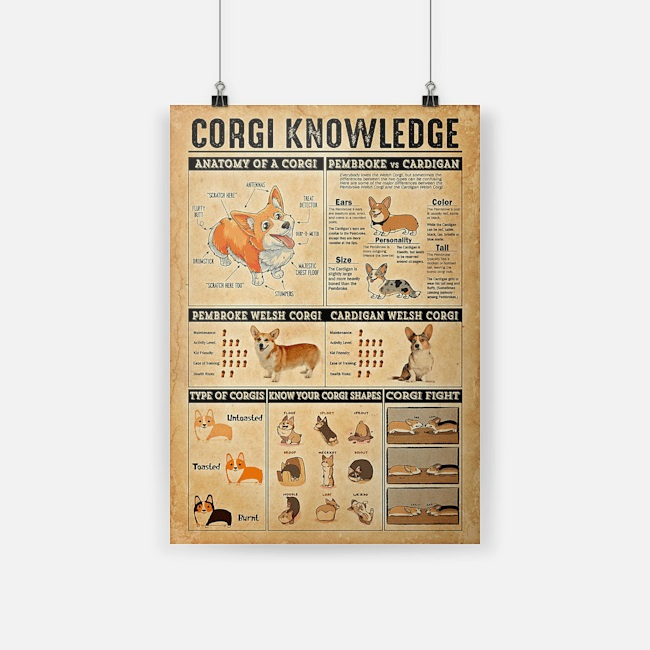 Corgi knowledge poster